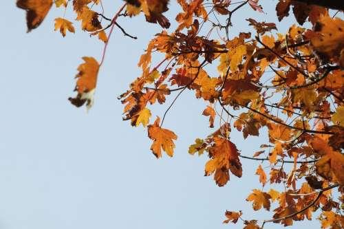 Autumn Autumn Run Golden Autumn Leaves In The Autumn