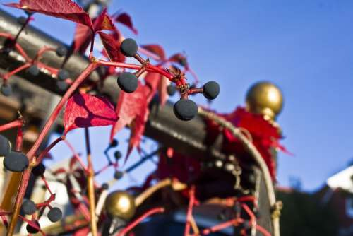 Autumn Railing Wine Wild Fouling Wine Partner