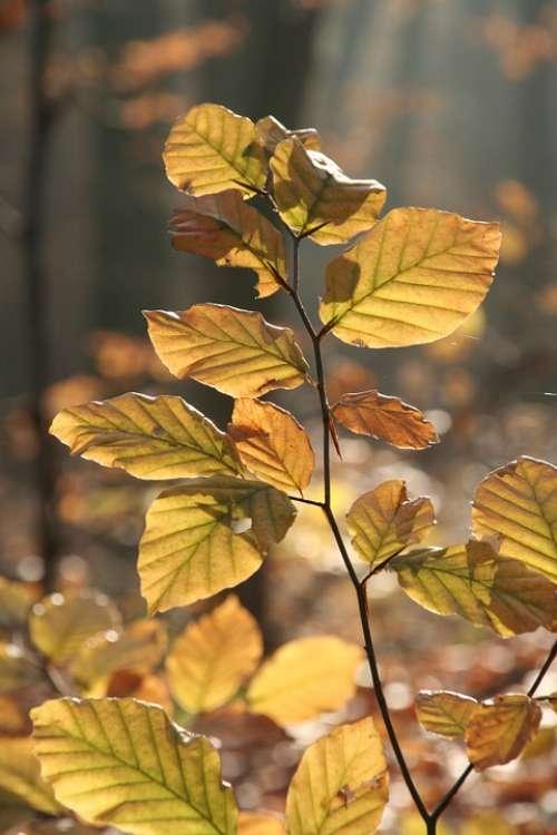 Autumn Forest Leaves Golden Golden Autumn