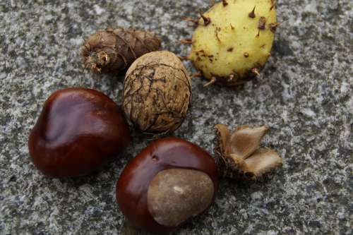Autumn Fruits Autumn Fruits Chestnut Nut