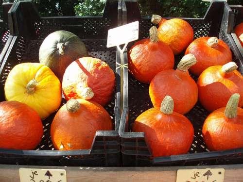 Autumn Gourd Golden Autumn