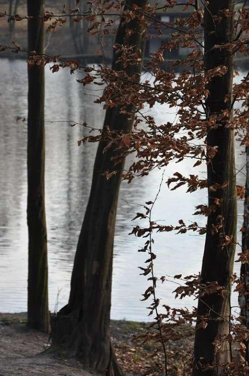 Autumn Tree Then Foliage Lake Pond Nostalgia