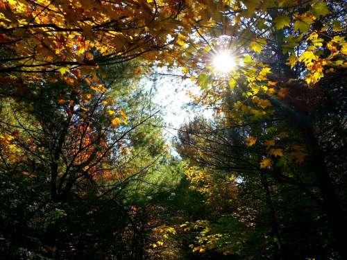 Autumn Leaves Leaf Season Color Red Colour