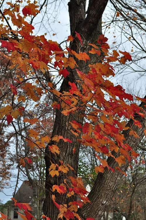 Autumn Season Tree Leaves Colorful Fall Colors