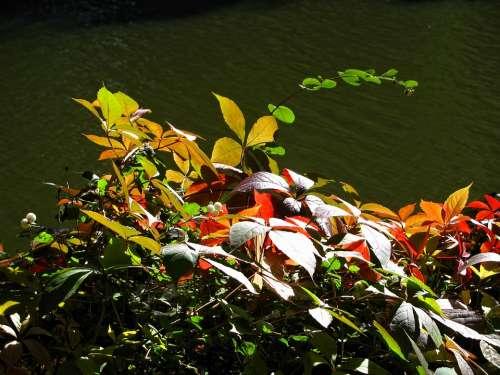 Autumn Golden Autumn Season Leaves Colors Colorful