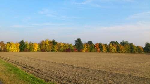 Autumn Nature Fall Foliage Farbenspiel