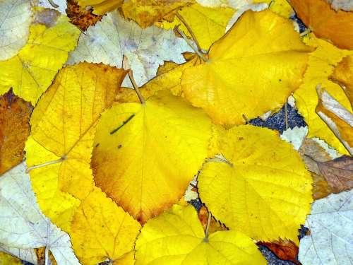 Autumn Leaves Nature Fall Fall Leaves