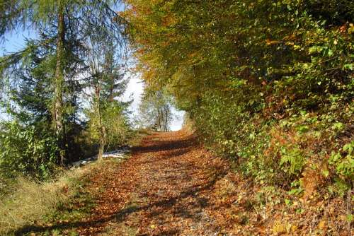 Autumn Forest Path Nature Mountainous Hilly Forest