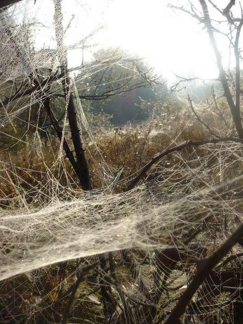 Autumn Web Branch Morning