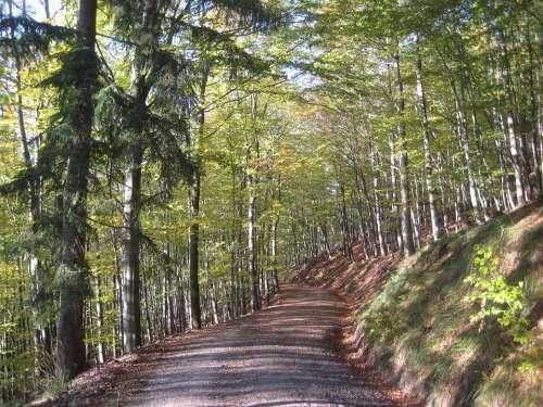 Autumn Forest Forest Path Resin Hanskühnenburg