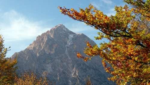Autumn Tree Leaves Mountain Landscape Scenic