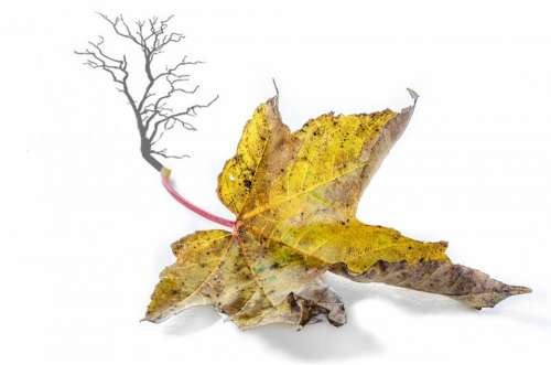 Autumn Tree Branch Branches Leaf Leaves Yellow