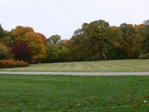 Autumn Garden Tree Nature Leaves Park Landscape