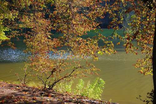 Autumn Lake Tree Leaves Nature Sunny Branches
