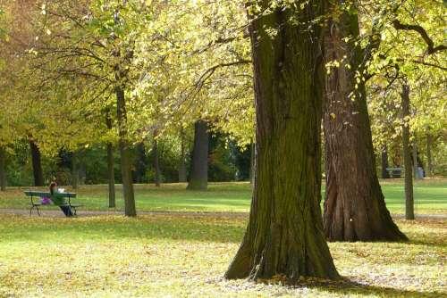 Autumn Park Trees Leaves