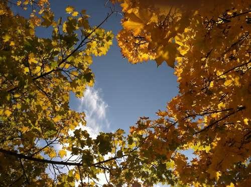 Autumn Nature Leaf Season Yellow Trees Foliage