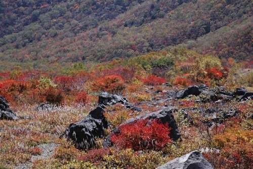 Autumn Autumnal Leaves Landscape Valley Rock