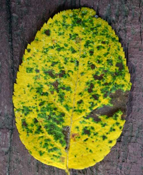Autumn Leave Yellow Leaf Nature Fall Seasonal