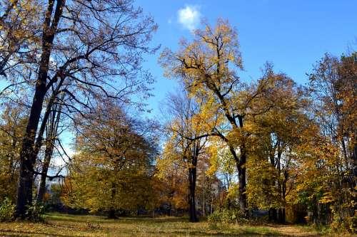 Autumn Trees October Nature Tree Fall Season