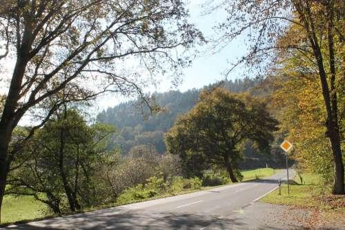Autumn Road Trees Avenue Driving A Car Leaves