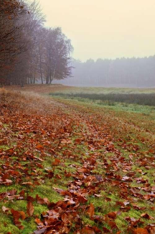 Autumn Autumn Mood Nature Leaves Crap Fog Foliage