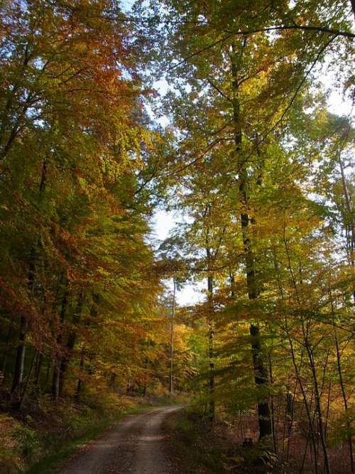 Autumn Forest Trees Nature Leaves Sky
