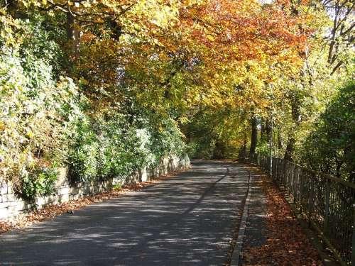 Autumn Tree Trees Road Orange Fall Season