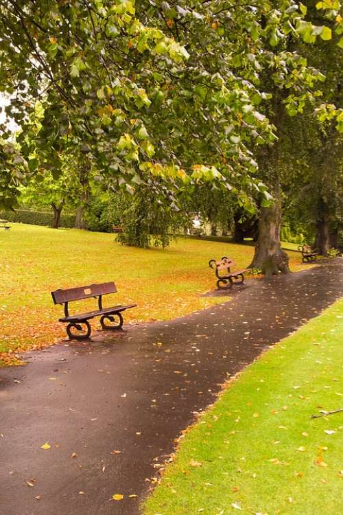 Autumn Fall Foliage Bench Landscape Leaf Leaves