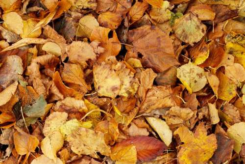 Autumn Backdrop Background Bright Brown Bunch Dry