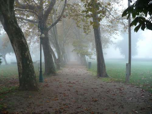 Autumn Promo Wood Trees Nature Fog