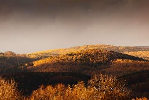 Autumn Evening Fall Forest Landscape Light