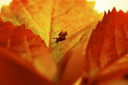 Autumn October Leaf Colorful Snail Leaves Forest