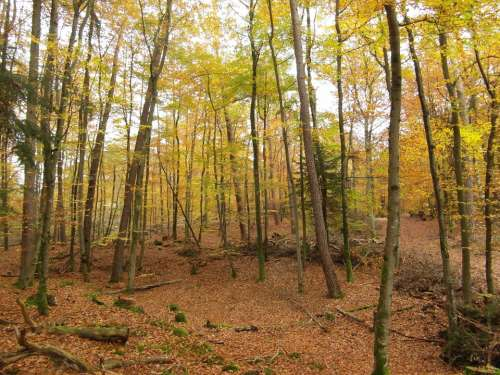 Autumn Forest Trees Emerge Autumn Forest Colorful