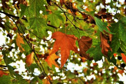Autumn Leaves Leaves Foliage Yellow Orange Rust