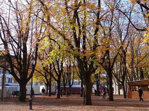 Autumn Trees Leaves Trees Colorful Leaf