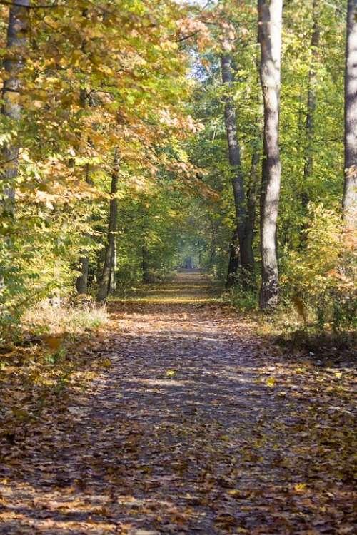 Autumn Way Trail Beech Wood Golden October Autumn
