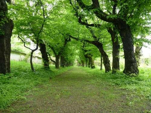 Avenue Trees Book