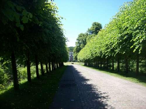 Avenue Walk Away