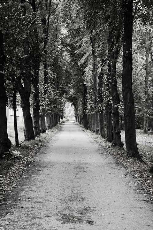 Avenue Trees Away Road Hemming Autumn