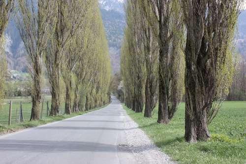 Avenue Trees Away Tree Road
