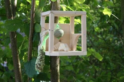 Aviary House Birds Sparrow Schwalbe Bird Animal
