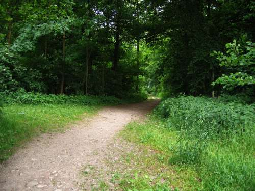 Away Forest Forest Path Glade Direction Bushes