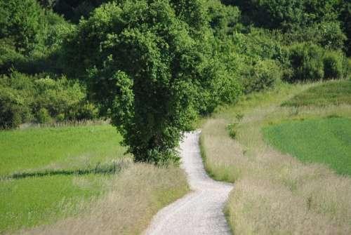 Away Nature Lane Tree Landscape Summer Meadow