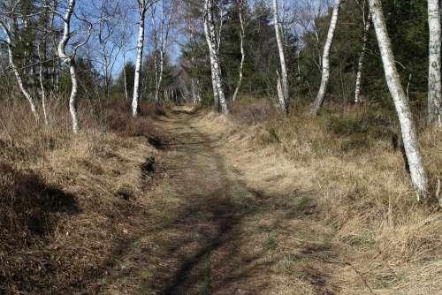 Away Path Birch Hiking Migratory Path