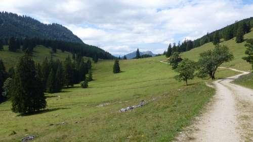 Away Lane Bavaria Allgäu Bear Moss Alpe Reported