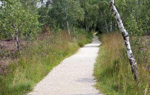Away Trail Nature Birch Promenade Nature Trail