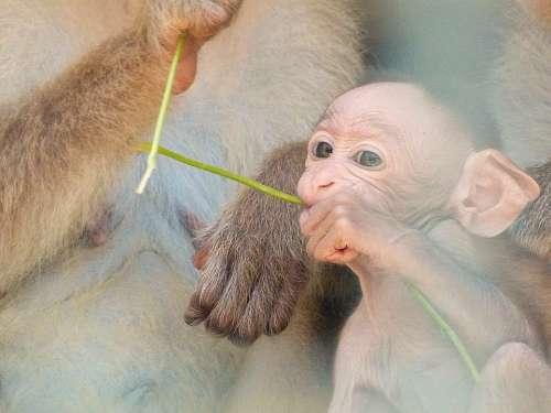 Baby Monkey Love