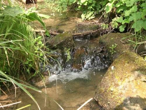 Bach Water Murmur Clear