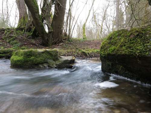 Bach Moss Water Forest