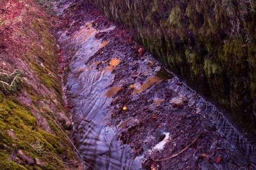 Bacj Channel Stream Bed Water Bach Moss